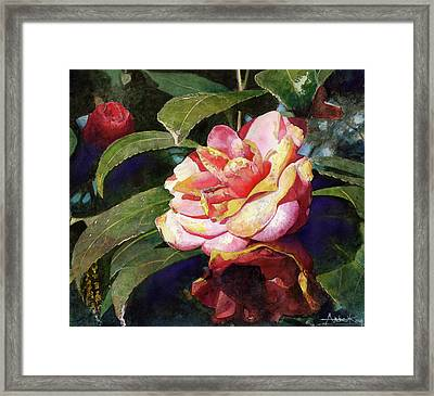 Karma Camellia Framed Print by Andrew King