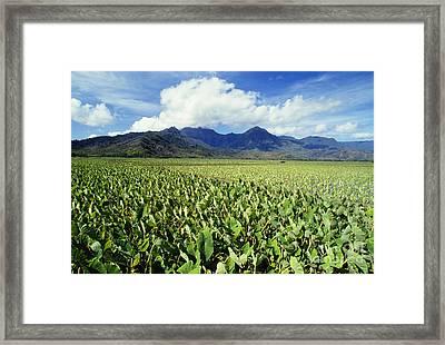 Kauai, Wet Taro Farm Framed Print by Bob Abraham - Printscapes