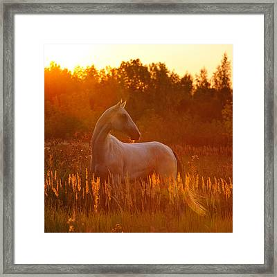 Kaytag Framed Print by Artur Baboev