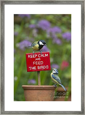 Keep Calm And Feed The Birds Framed Print by Tim Gainey