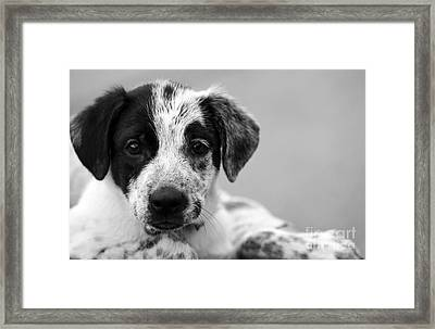 Keep Me Framed Print by Amanda Barcon