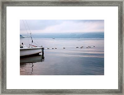 Keep Your Ducks In A Row Framed Print by Steven Ainsworth