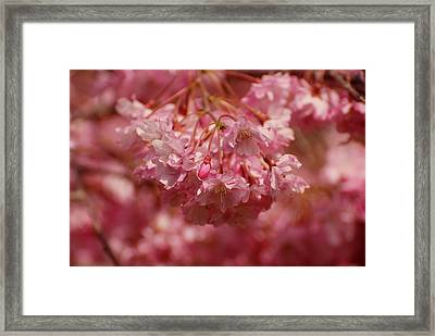 Keeps Me Hanging On Framed Print by Angie Tirado