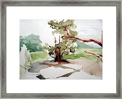 Kennedy Meadows Tree Framed Print by Amy Bernays