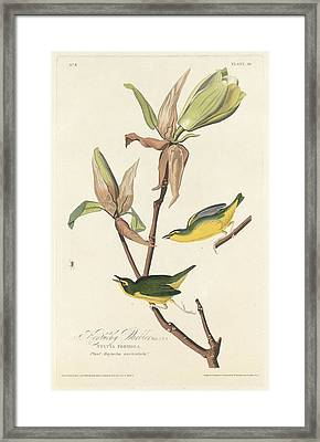 Kentucky Warbler Framed Print by John James Audubon