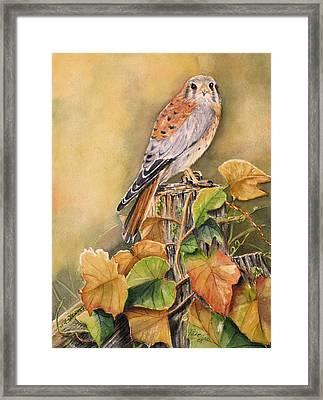 Kestrel In Fall Framed Print by Patricia Pushaw