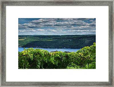 Keuka Vineyard I Framed Print by Steven Ainsworth