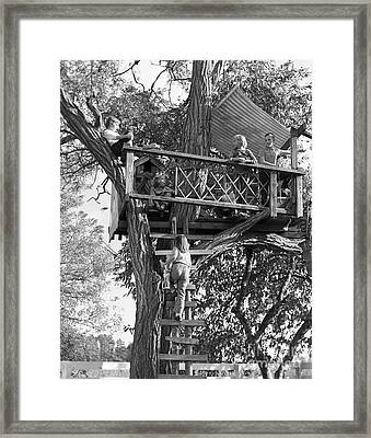 Kids Playing In Tree House, C.1960s Framed Print by D. Corson/ClassicStock