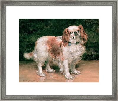 King Charles Spaniel Framed Print by George Sheridan Knowles
