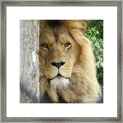 King Framed Print by Crystal Loppie