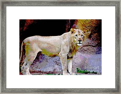 King Edition 2 Framed Print by Judy Kay
