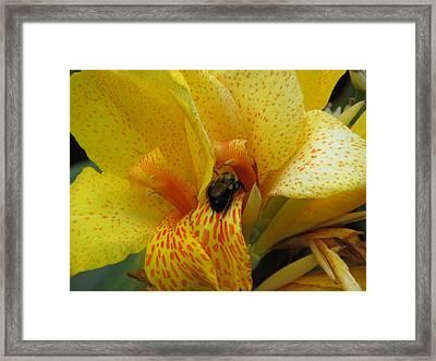 King Humbert With Bee Framed Print by M E Cieplinski