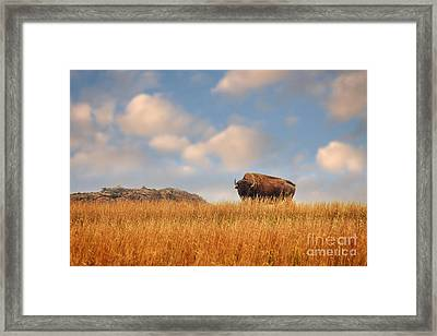 King Of The Hill Framed Print by Tamyra Ayles