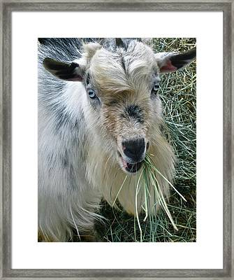 King Of The Road Framed Print by Gwyn Newcombe