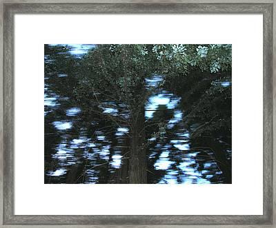 King Tree Framed Print by Brad Wilson