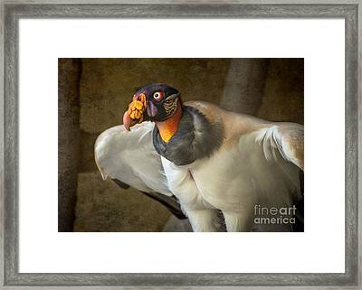 King Vulture Framed Print by Jamie Pham
