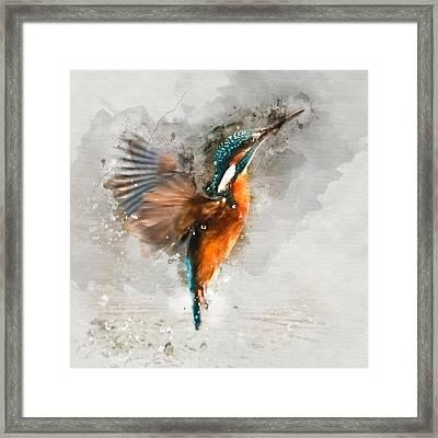 Kingfisher Bird Watercolor Portrait 1 - By Diana Van Framed Print by Diana Van