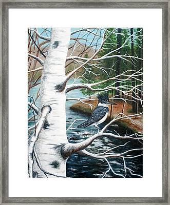 Kingfisher Framed Print by Brenda Baker