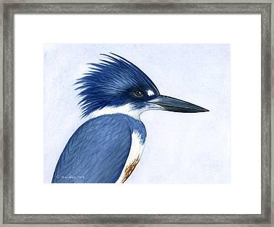 Kingfisher Portrait Framed Print by Charles Harden