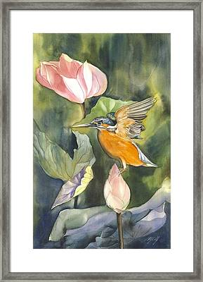 Kingfisher With Lotus Framed Print by Alfred Ng