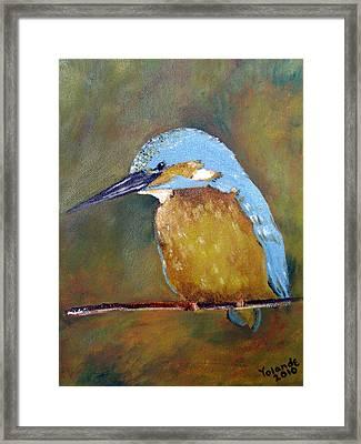 Kingfisher Framed Print by Yolande Havenga