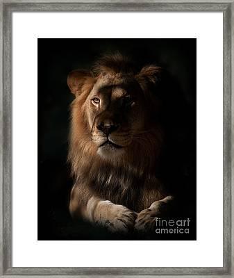 King's Eye Framed Print by Adrian Tavano