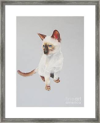 KIP Framed Print by Karol Wyckoff