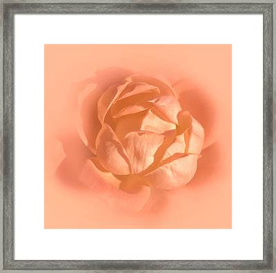 Kiss By A Rose Framed Print by Iryna Burkova