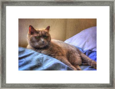 Kissed By The Sun - Grey Cat Green Eyes  Framed Print by Joann Vitali