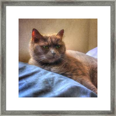Kissed By The Sun - Grey Cat With Green Eyes - Square Framed Print by Joann Vitali