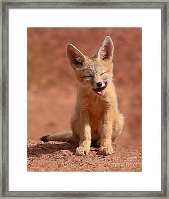 Kit Fox Pup Mid-lick Framed Print by Max Allen