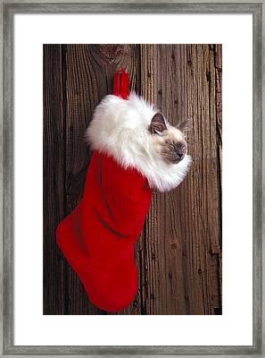 Kitten In Stocking Framed Print by Garry Gay