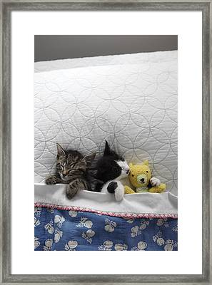 Kittens In Bed With Toy Framed Print by Gillham Studios