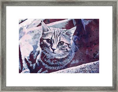 Kitty Cat Framed Print by Jutta Maria Pusl