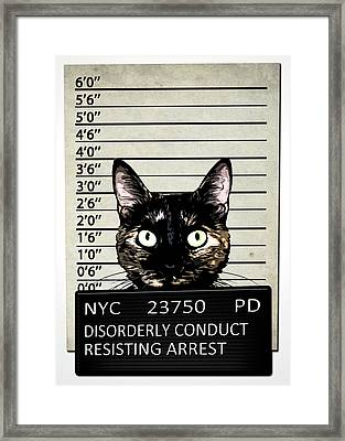Kitty Mugshot Framed Print by Nicklas Gustafsson
