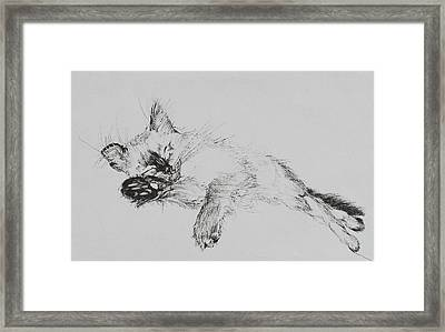 Kitty Framed Print by Vincent Alexander Booth