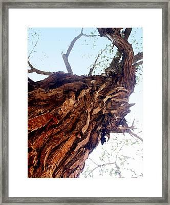 knarly Tree Framed Print by Marty Koch