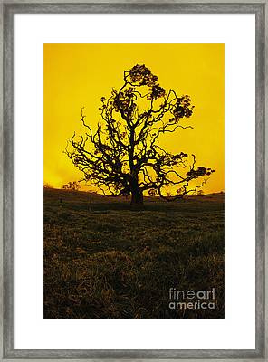 Koa Tree Silhouette Framed Print by Carl Shaneff - Printscapes