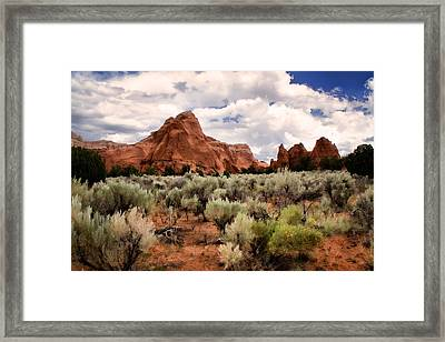 Kodachrome Sage Framed Print by Lana Trussell