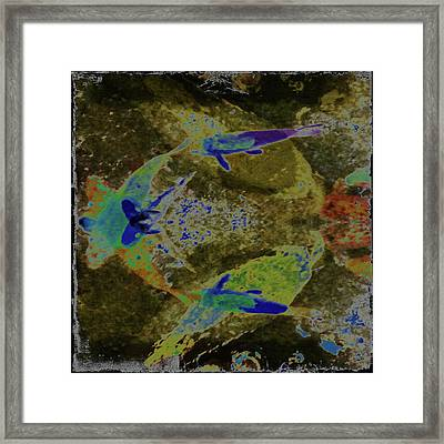 Koi 3 Framed Print by Ann Tracy