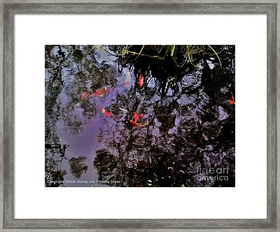 Koi Reflections Evening Framed Print by Jamey Balester