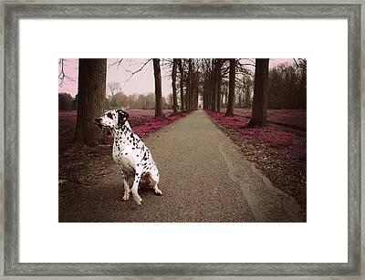 Kokkie On The Autumn Alley Of Rhoon Framed Print by Jenny Rainbow