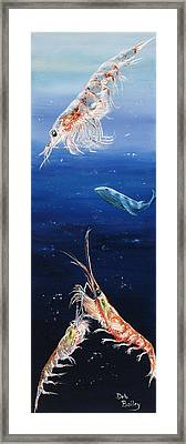 Krill Framed Print by Debra Bailey
