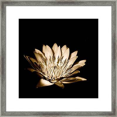 Kuala Lumpur Orchid Garden Malaysia A Framed Print by Per Lidvall