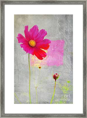 L Elancee - J176a Framed Print by Variance Collections