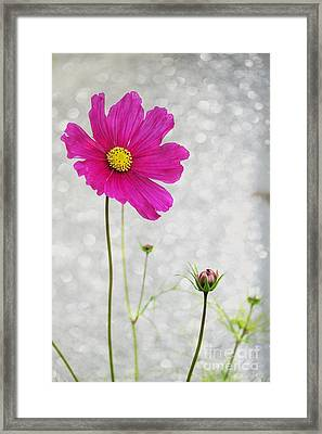 L Elancee Framed Print by Variance Collections