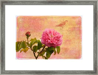La Rose Framed Print by Kim Hojnacki