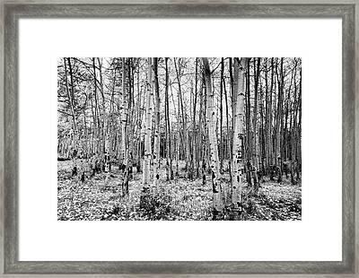 La Sal Aspen Black And White Framed Print by Mark Kiver