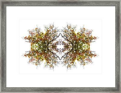 Lace Framed Print by Debra and Dave Vanderlaan