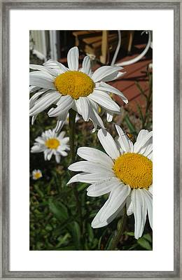 Lady Bug Framed Print by William Goodson